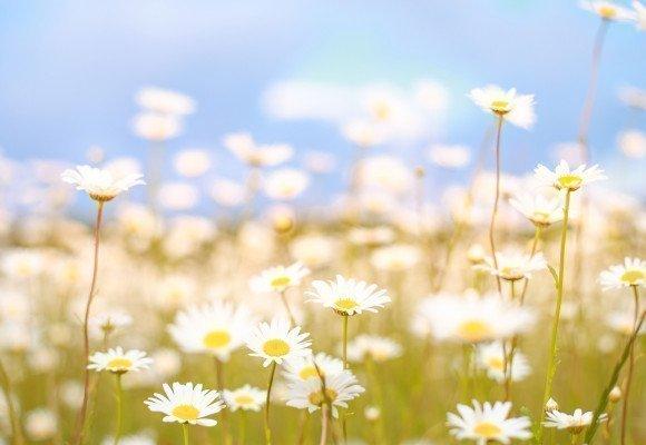 ¿Cómo hacer que tu casa huela a primavera?